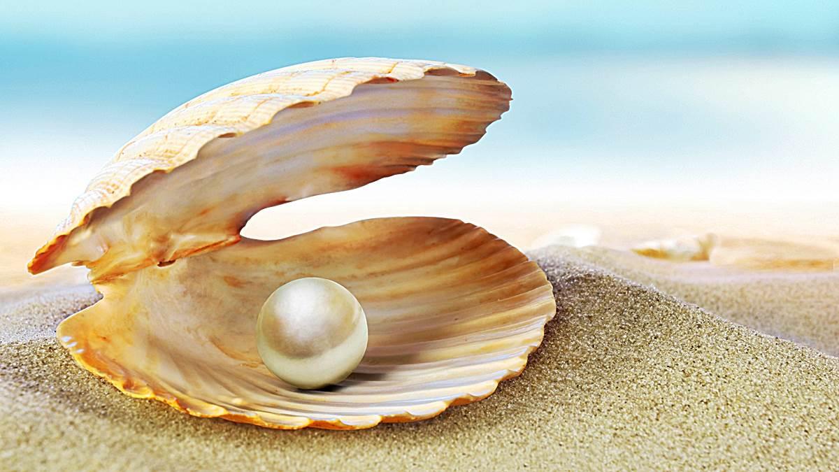 Soos 'n pêrel wat gevorm word deur 'n besering in die sagte deel van 'n oester, so word die eerste van Christus se erfenis, die Kerk, geleidelik in Christus gevorm. https://faithequip.co.za