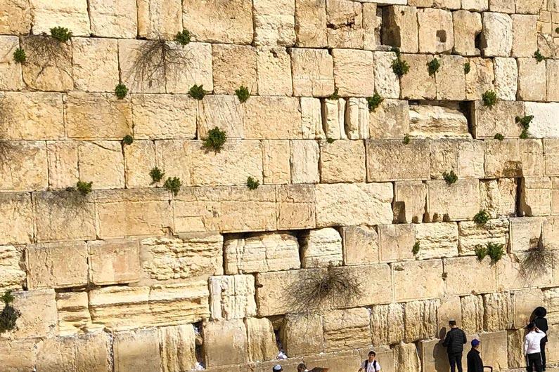 Die twee getuies gaan 'n belangrike rol in die eindtye speel. Hulle gaan vir 1260 in Jerusalem profeteer (Open 11:8), waarskynlik op die tempelberg en Israel en die nasies tot bekering oproep want die koninkryk van die hemele sal dan weer naby wees (vgl. Mat 4:17; 24:14). Dit is moontlik dat die twee getuies se verkondiging van die evangelie tot die weergeboorte van 144 ooo Joodse mans gaan lei, welke 144 000 tydens die Verdrukkingstydperk die evangelie van die koninryk sal verkondig (vgl. Mat 10:16–42; 24:14; McClain 1959:458). Wanneer die twee getuies se bediening voltooi is, eers dán sal die antichris hulle kan doodmaak, maar ná 3,5 dae sal God hulle uit die dood opwek en hulle sal 'n hemelvaart beleef.
